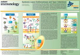 systemic lupus erythematosus sle and type i ifn pbl assay science