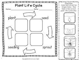 ideas about kindergarten plant life cycle printables wedding ideas