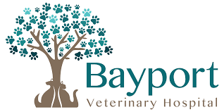 bayport veterinary hospital veterinarian in bayport ny usa