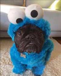 Cookie Monster Meme - dog cookie monster