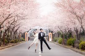 cherry blossom wedding top sellers top ranked pre wedding package 1 hellomuse