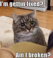 Silly Meme - 21 funny and silly cat memes random funny cat