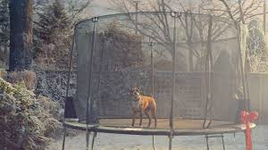 john lewis christmas ad tries to cheer us up with buster the boxer