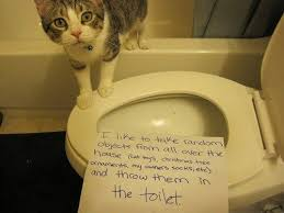 I Can Has Cheezburger Meme - 33 times owners shamed their cats i can has cheezburger funny
