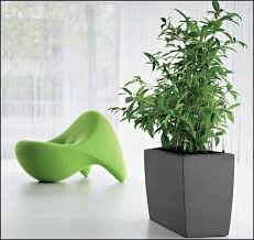 best 25 indoor plants low light ideas on pinterest low light