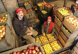 5 orchards for family friendly apple picking in massachusetts