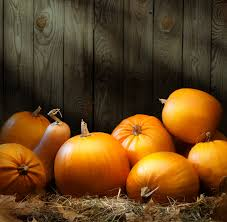 Pumpkin Farms In Wisconsin Dells by Check Out These Local Pumpkin Patches Unisource
