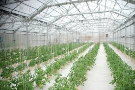 Greenhouse Design Hydroponic Greenhouse Rimol Greenhouses