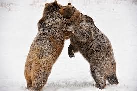 Montana wildlife tours images Animals of montana winter tour 2012 don johnston 39 s nature jpg