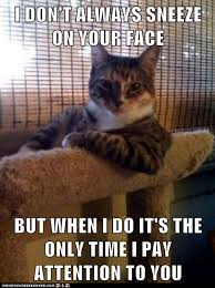 Attention Meme - the most interesting cat in the world you want attention get a dog