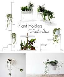 t d c indoor plants fresh ideas
