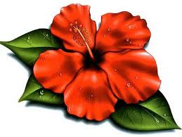 hawaiian flower tattoo design photos pictures and sketches