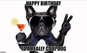 Happy Birthday Meme Dog - cool dog birthday memes imgflip