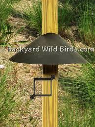 Backyard Wild Birds by Best 20 Squirrel Baffle Ideas On Pinterest Squirrel Proof Bird