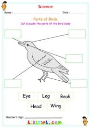 animals worksheet for kids science activity sheet