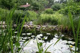 native water plants the wilder side of me