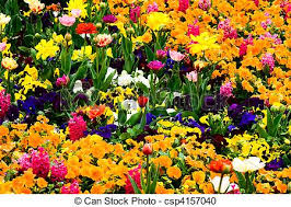 stock photography of garden full of flowers garden with colorful