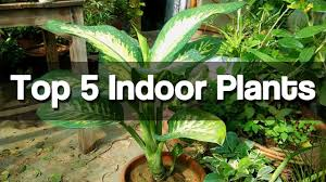 top 5 best indoor plants easy to grow indoor plants urdu