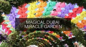 magical dubai miracle garden trip experiences