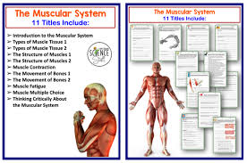Human Body Muscles Images Amy Brown Science Human Body The Skeletal Muscular And