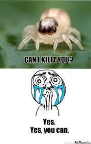 Cute Spider Meme - cute spider by recyclebin meme center