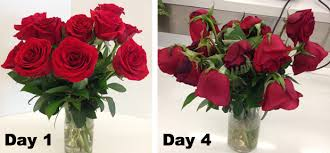 best flower delivery service best flower delivery services ordering roses for s day