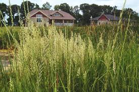 manitoba native plants assiniboine landing native plant solutions