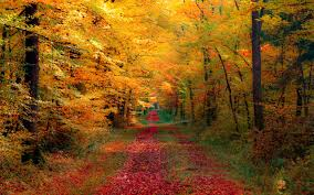 fall autumn autumn leaf fall hd wallpapers chainimage