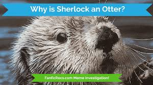 Cumberbatch Otter Meme - why is bbc sherlock holmes an otter fanfiction meme investigation