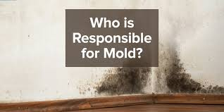Types Of Mold In Bathroom by Is A Landlord Always Responsible For Mold Remediation