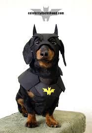 Batman Robin Dog Halloween Costumes Dachshund Halloween Costumes U0026 Contest Results Crusoe Dachshund