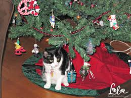 lola the rescued cat christmas is coming six tips to cat proof