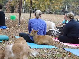 meditation hux family farm