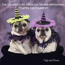 pugs and kisses home facebook