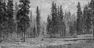 the forests chapter 8 u0027the mountains of california u0027 by john muir