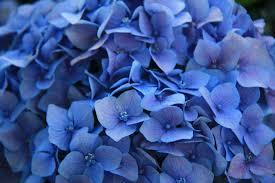 Purple And Blue Flowers Blue Purple Flower Flower Inspiration