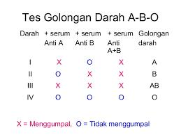 Serum Tes Golongan Darah darah