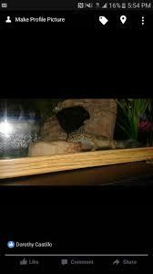 leopard gecko lighting at night leopard gecko pet supplies in newport beach ca