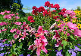 scenic flower garden filled with vibrant perennials in full bloom