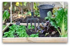 container vegetable gardening beginners container vegetable