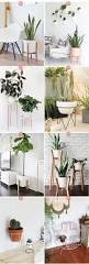 Office Desk Plant by Plant Stand Buy Plants Plant Shelves Bestnds Ideas On Pinterest
