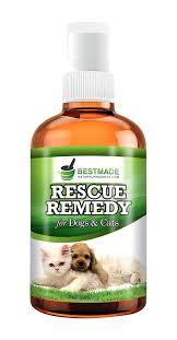 guide to the best pet deals for dog u0027s and cat u0027s u2013 petsmart petco