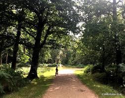 brock hill to blackwaterarboretum walk rhinefield ornamental