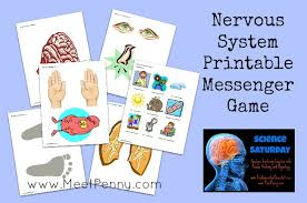 Anatomy And Physiology Nervous System Study Guide Nervous System Lesson With Printable Game Meet Penny
