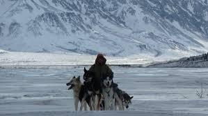 animals wild and domestic define denali u0027s winter wilderness