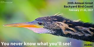 Audubon Backyard Bird Count by Audubon Society On Twitter
