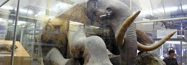 wooly mammoths brought institute creation