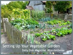 how to start a vegetable garden in your backyard outdoor goods