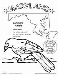 maryland state bird worksheet education com