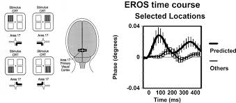 frontiers fast optical imaging of human brain function
